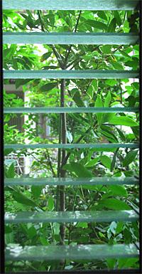 Jungle0706_01