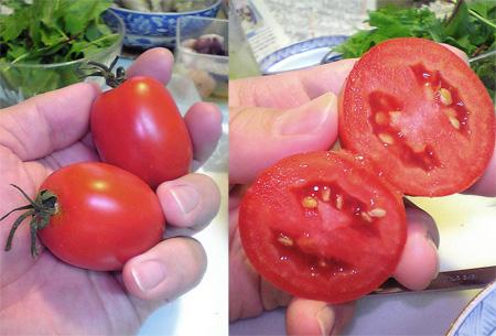 Tomato080718_009