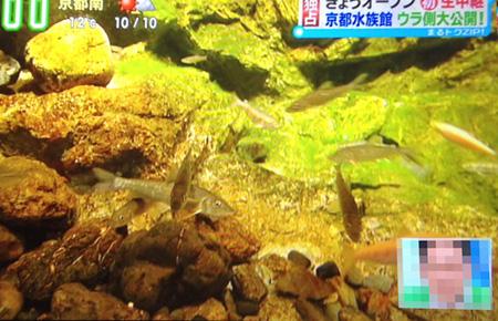 Kyoto_aquarium04