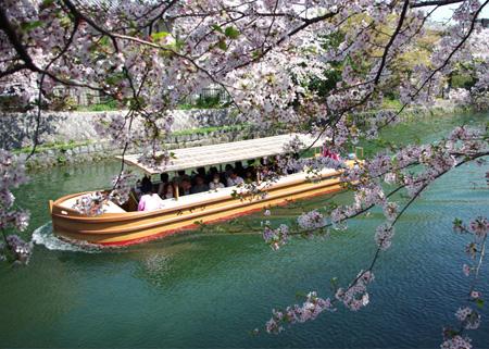 Sakurawatari_011