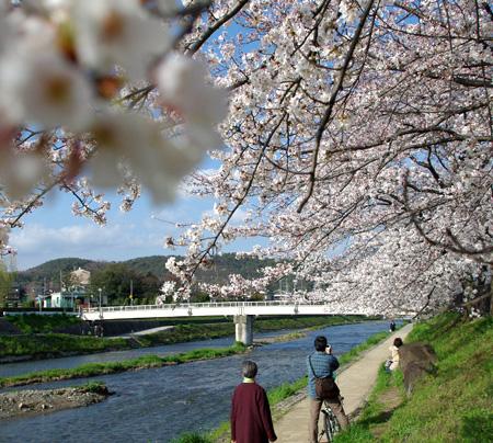 Sakurawatari_035