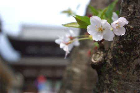 Doubuki_7945