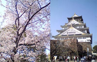 Osakajoesakura